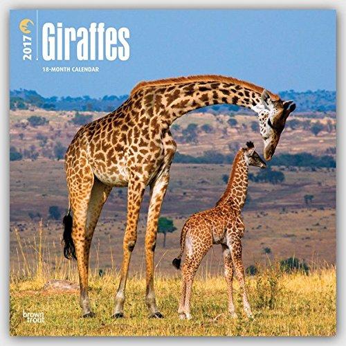 Giraffes - Giraffen 2017 - 18-Monatskalender: Original BrownTrout-Kalender [Mehrsprachig] [Kalender]