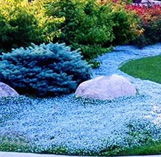 rockery plant seeds
