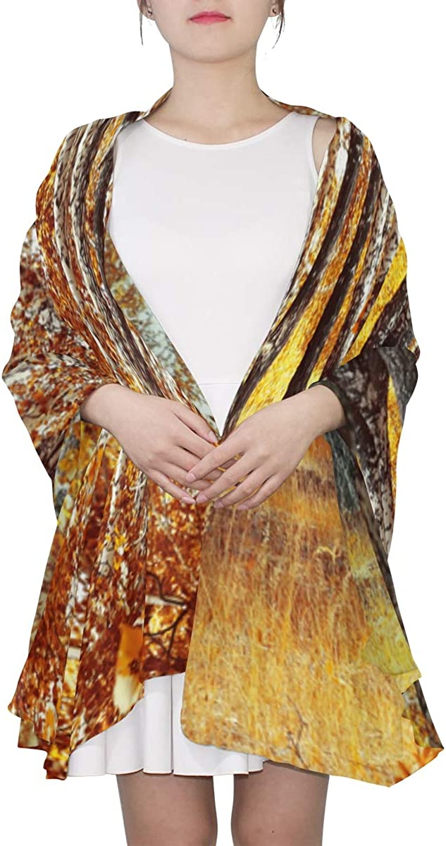 Autumn Birch Grove Orange Grass Unique Fashion Scarf For Women Lightweight Fashion Fall Winter Print Scarves Shawl Wraps Gifts For Early Spring