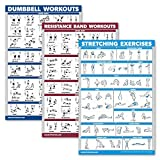 Palace Learning 3 Pack: Dumbbell Exercise Poster + Resistance Bands Workouts + Stretching Exercises - Set of 3 Workout Charts (Laminated, 18' x 27')