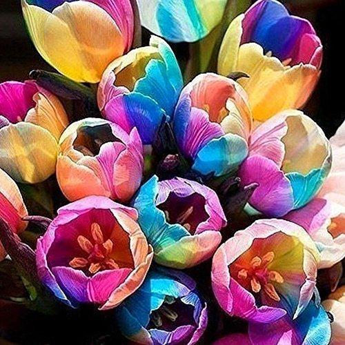 BigFamily Pots Rainbow Tulipe Gardon Pots Planter Maison Salon Balcon Graines De Fleurs