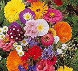 Lot de 50 Graines fleurs en malange a couper jardin colorés fleurs +...