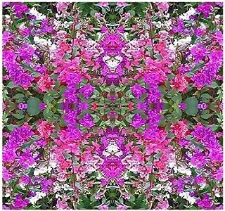 5,000 Mountain Garland Mix Flower Seeds Clarkia Unguiculata Excellent Cut Flower
