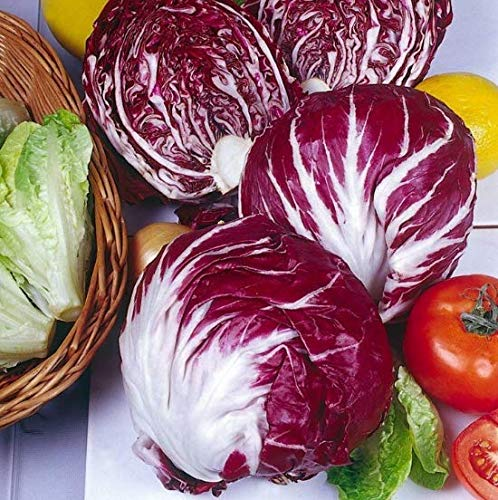 Sharpy 100 Pcs Radicchio Samen Palla Rossa Salat Samen - Rote Radicchio Samen