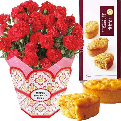 花のギフト社 母の日 カーネーション こがね芋 花とスイーツ 鉢花 花 鉢花ギフト