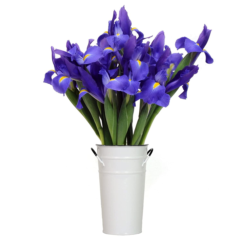 Stargazer Barn- Starlight Bouquet Popular popular - with Ranking TOP6 Iris Far Vase Telstar