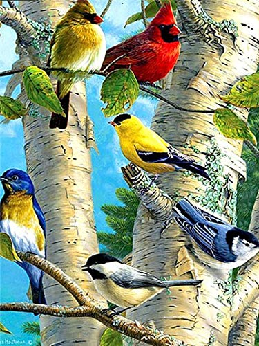 Animal pájaro-Pinturas Diamantes 5D-Pintura Diamante Punto de Cruz Diamante-Art Deco40x50cm