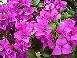 10pcs mix-color 'bougainvillea spectabilis willd semi bonsai semi di piante fiore fiori vaso di fiori fioriere