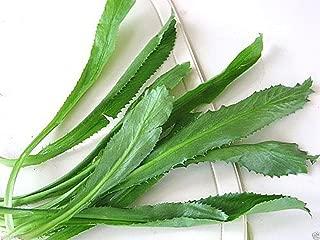 Culantro Seeds,Recao,A.K.A;Vietnamese Coriander,Thai Parsley,ngo gai,Shadon beni(100 Seeds)