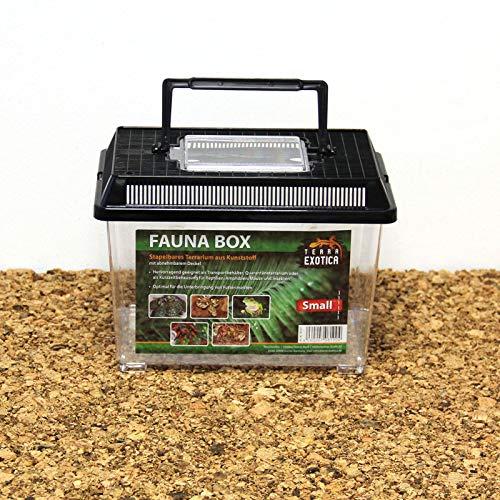 Terra Exotica Fauna Box - small 23 x 15 x 16,5 cm