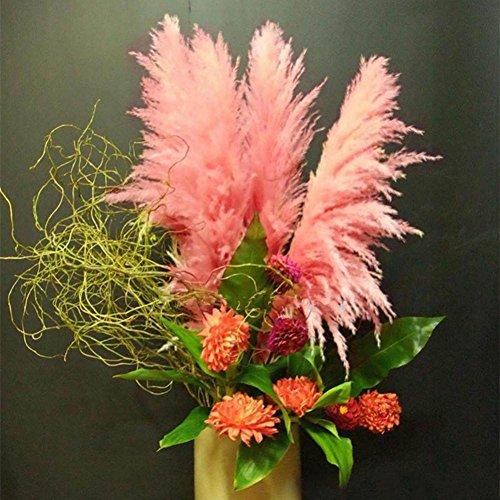 Shiningup 1000 Pièces Cortaderia Pampas Grass Seed Bleu Rose Violet Blanc Jaune Romantique Couleur