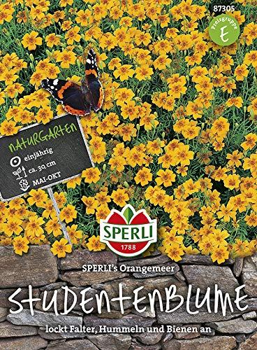 Sperli-Samen Studentenblume SPERLI's Orangemeer