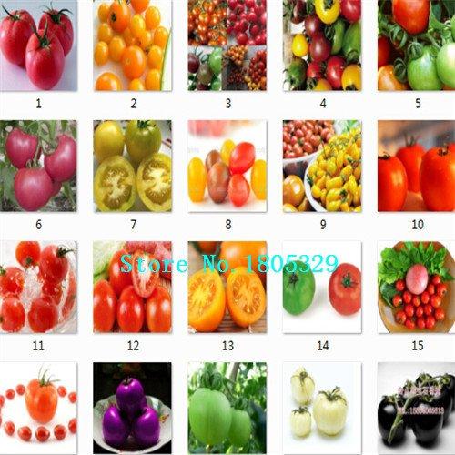 SVI Semences de l'héritage non OGM Blanc glace tomate cerise 100 graines de semences de légume