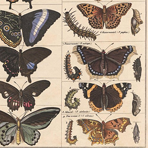 Meishe Art Poster Print Vintage Butterflies Insects Butterfly Breeds Collection Species Identification Reference Chart Pop Classroom Club Home Wall Decor