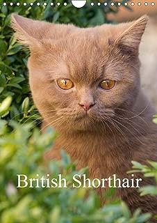 British Shorthair 2020: Beautiful Outdoor Photos of British Shorthair Cats (Calvendo Animals)