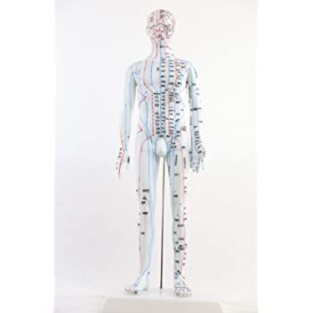 ツボ 人体模型 鍼 灸 経絡経穴鍼灸全身模型 経穴人形 男性 50cm 刺鍼練習