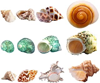 Luckybaby Hermit Crab Shells Growth Turbo Seashell Supplies Natural Sea Conch Snail Home Decor