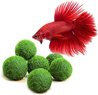 LUFFY Betta Balls : Live Round-Shaped Marimo Plant : Natural Toys for Betta Fish : Aquarium Safe