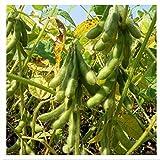 100 Edamame Green Soy Bean Giant Soybean Seeds