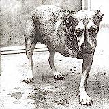 Songtexte von Alice in Chains - Alice in Chains