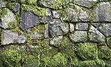 BIGGIES- Window Well Scenes Wall Art- Moss, 60' x 120'