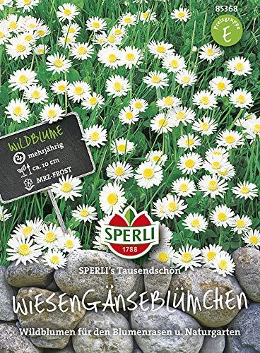 Sperli 85368 Wiesengänseblümchen (Gänseblümchensamen)