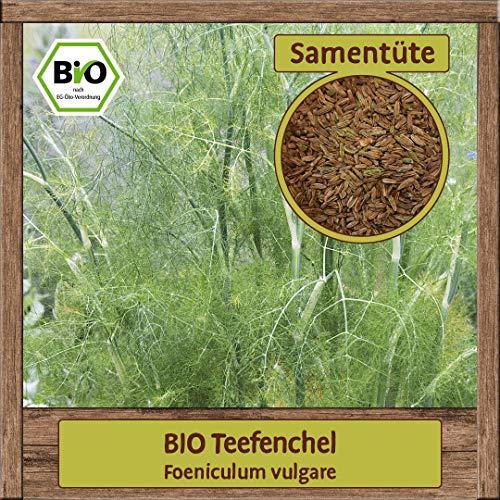 BIO Fenchel Samen Sorte (Foeniculum vulgare) Kräutersamen Fenchel Saatgut