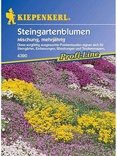 Steingartenblumen Mischung verschiedener Arten