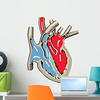 Wallmonkeys FOT-76139674-24 WM180255 Human Heart Anatomy Peel and Stick Wall Decals (24 in H x 19 in W), Medium