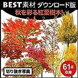 【BEST素材】秋を彩る紅葉樹木|ダウンロード版