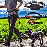 Joggingleine | Premium Hundeleine 120cm Bis 200cm | Elastisch Reflektierend Reißfest Gepolsterter Hüftgurt Hüftbeutel | Freihändig Laufen Spazieren Wandern - 6