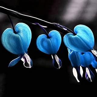 dicentra love hearts