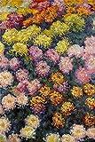 NBgycheche Rompecabezas 1000 Piezas de Rompecabezas de Rompecabezas Colibrí Picking Flowers para niños Rompecabezas Juegos de Juguetes Educativos (Size : 1000PCS)