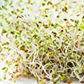 Certified Organic Broccoli Sprouting Seeds for Broccoli Sprouts & Microgreens | Non GMO Seed Heirloom Variety | Perfect for Sprouting Jar & Seed Tray | Rainbow Heirloom Seed Co.