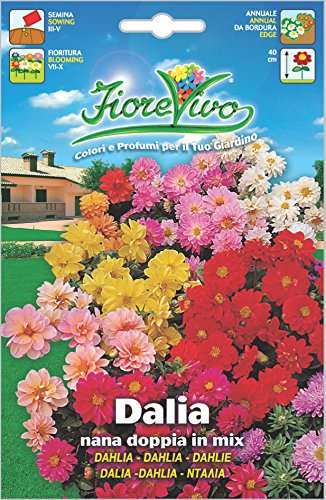 Hortus 60SDFD014 Fiorevivo Dalia, Nana, Doppia, Mix, 13x0.2x20 cm