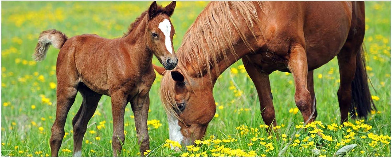 Wallario selbstklebendes XXL Poster Poster Poster - Pferde auf der Koppel in Premiumqualität, Größe  80 x 200 cm B018W5OMIK fb21b0