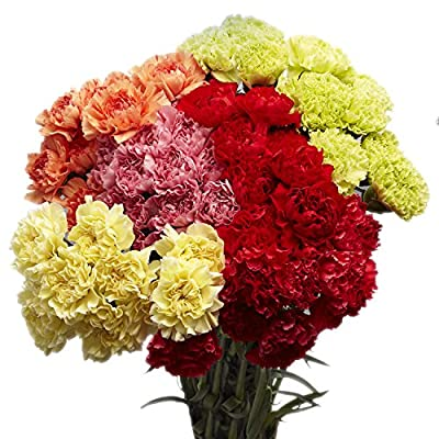 100 Assorted Carnations - Fresh Cut Flowers- Next Day Delivery Tuesday June 29 by Globalrose