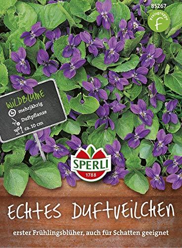 Echtes Duftveilchen, mehrjähriger Frühlingsblüher auch für Schatten geeignet