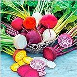 ビート種子種ビート根混合血黄色白色野菜家庭菜園高発芽庭パティオ植物子供植物200pcs