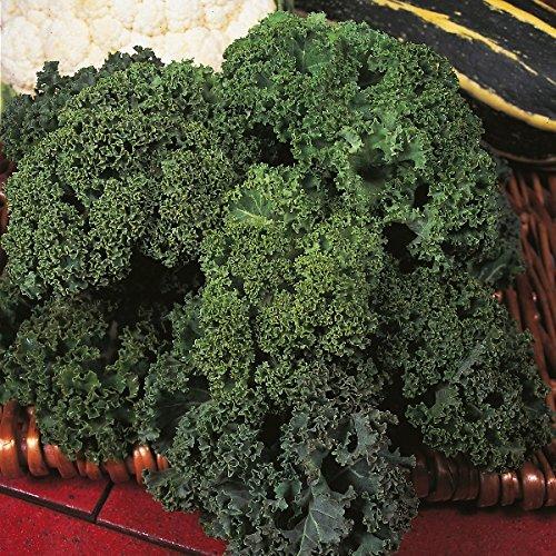 Suffolk Herbes - Kale Organic Westland Winter - 50 graines