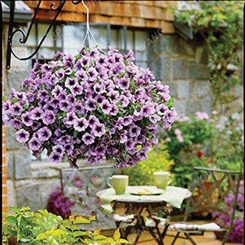 100pcs/Paquet Bonsai Hanging Petunia Graines de couleurs mélangées Belle graines de fleurs Bonsai pot Bricolage & Jardin Livraison gratuite Jaune clair