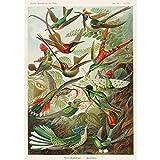 Meishe Art Plakatdruck Poster Kolibris Antilope Kunstdrucke