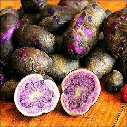 Homely 100 Stcke Kartoffelsaatn Seltene High-Nutrition Und Lila Kartoffeln Bonsai Obst Und Gemse saatn Fr Zuhause * Bauernhof Jardin Pl