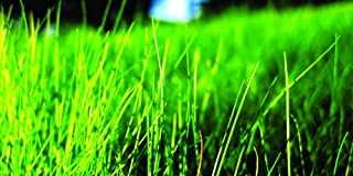 Nature's Seed TURF-FF-500-F Fine Fescue Grass Seeds Blend, 500 sq. ft