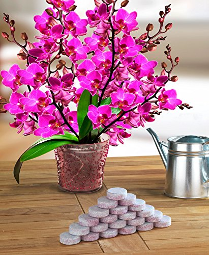 Wenko Düngemittel Tabs für Orchideen, 20-er Pack, weiß, 2,5 x 2,5 x 14 cm, 5614016500