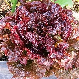 David's Garden Seeds Lettuce Loose Leaf Ruby SL7482 (Red) 500 Non-GMO, Heirloom Seeds