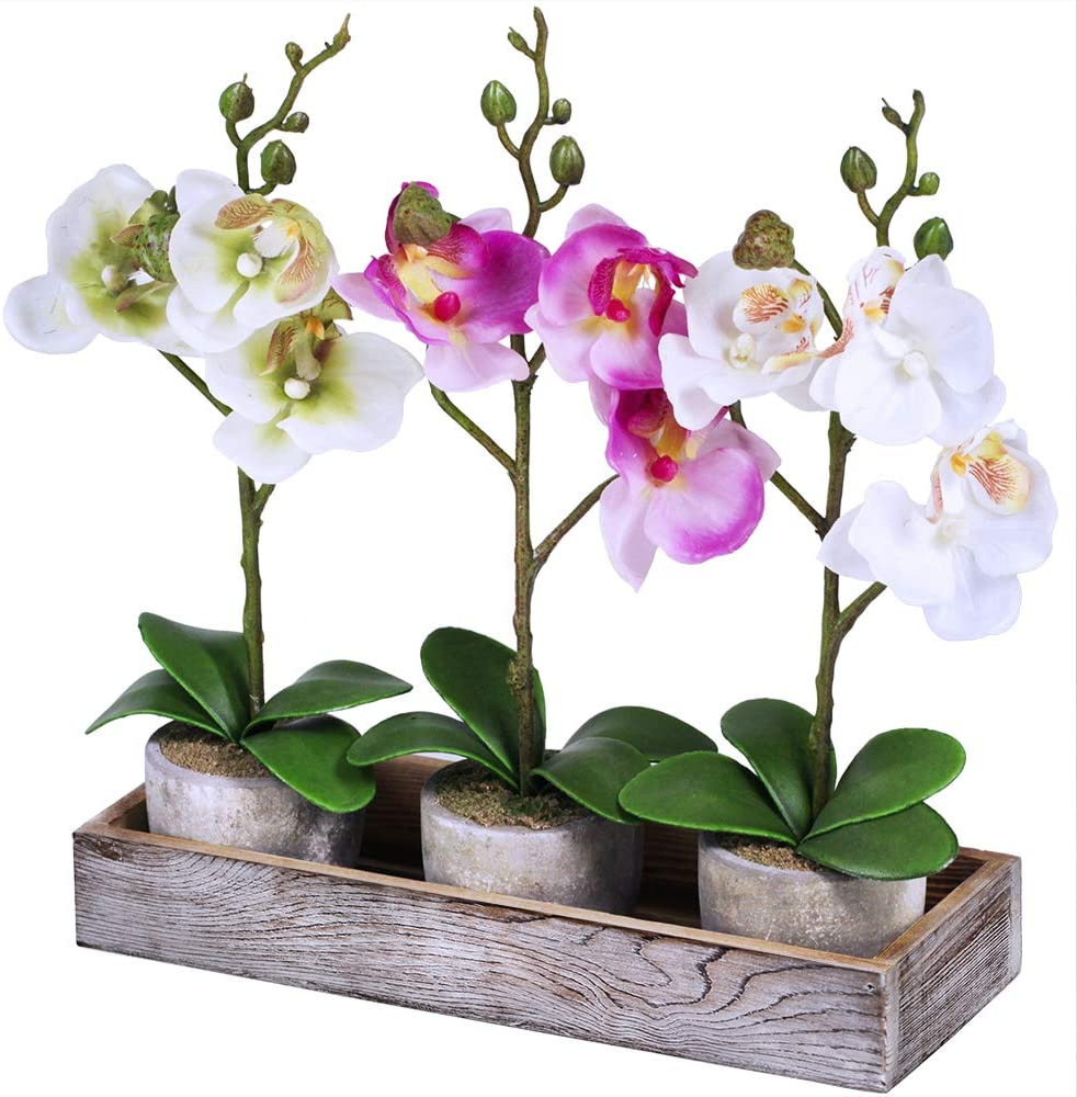 Set of 3 Fake Orchid Assortment Mini W with Potted Plants Factory 5 ☆ very popular outlet