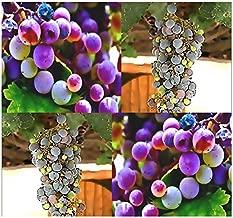 vitis californica wine