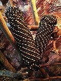 Schwarzes Segeltauwerk 4 - 16 mm