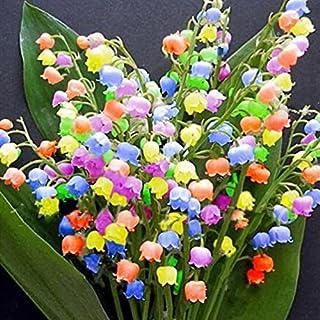 Kisshes Seeds- 100 unids semillas de flores de orquídeas de